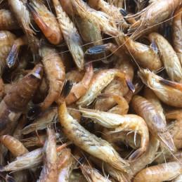 Crevettes grises (Bretagne)