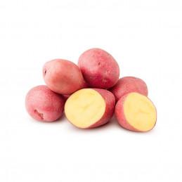 Pomme de terre Roseval...
