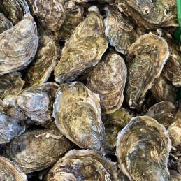 12 huîtres du Banc d'Arguin