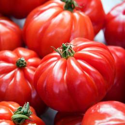 Tomate variété Marmande